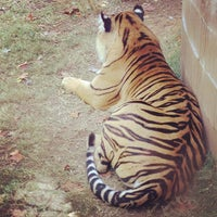 Photo taken at Zoo Atlanta by StephQJ on 10/26/2012
