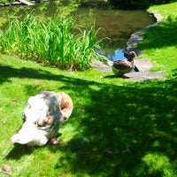 Photo taken at Geese Pen at Public Gardens by Darcy on 7/14/2013