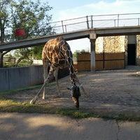Photo taken at Abilene Zoo by Randy D. on 8/22/2014