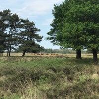 Photo prise au Nationaal Park Drents-Friese Wold par Marrigt v. le5/24/2018