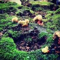 Foto tirada no(a) Arnold Arboretum por Dimka em 6/8/2013