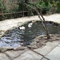 3/17/2013 tarihinde Sule L.ziyaretçi tarafından Papazın Bağı'de çekilen fotoğraf