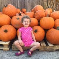Photo taken at St. Martin's Pumpkin Patch by Katie P. on 9/30/2015