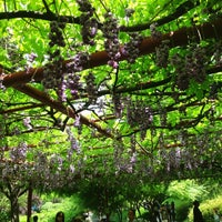 Photo taken at Jiading Wisteria Garden by Robin on 5/1/2013
