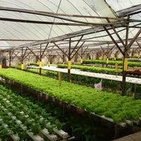 Photo taken at Big Red Strawberry Farm (Agro Tourism Garden) by Rina M. on 7/17/2013