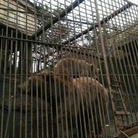 Photo taken at Смотровая Площадка Фиагдон и Мини-зоопарк by Irmulnik C. on 10/20/2016
