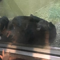 Photo taken at Great Ape House at the National Zoo by Taryn P. on 5/16/2017