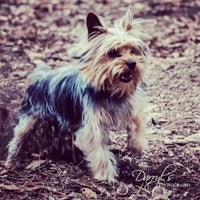 Photo taken at Tamarac Dog Park by Darryl H. on 2/19/2013