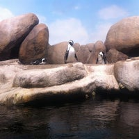 Photo taken at Penguin Tank by Cha C. on 1/2/2013