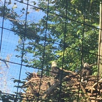 Photo taken at Bald Eagle Exhibit by Darla on 10/10/2016