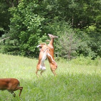 Photo taken at Cades Cove by Chris2Point0 on 7/14/2013