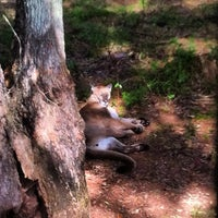 Photo taken at Tallahassee Museum by Britt C. on 9/26/2012