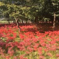 Photo taken at Kinchakuda Manjushage Park by gintonic1960 on 9/29/2017