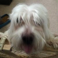 Dog Grooming New Hartford Ny