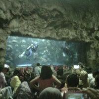 Photo taken at SeaWorld Indonesia by Eka S. on 1/5/2013
