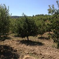 Photo taken at Nedim İn Bahcesi by Nedim K. on 7/20/2013