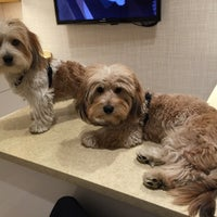 Photo taken at Chelsea Animal Hospital by Emme Jay on 9/4/2015