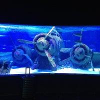 3/14/2013 tarihinde Fevzi T.ziyaretçi tarafından Antalya Aquarium'de çekilen fotoğraf