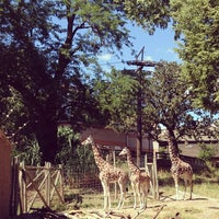 Photo taken at Giraffe Complex by Erin T. on 9/1/2013