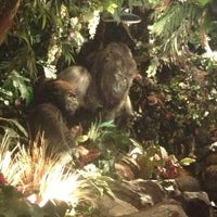 Photo taken at Rainforest Cafe by Luis T. on 7/14/2013