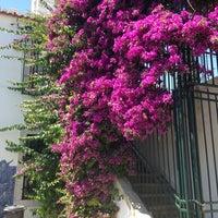 Das Foto wurde bei Jardim Júlio de Castilho von Anastasia am 6/16/2013 aufgenommen