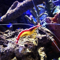 Photo taken at Sea Life Aquarium by David M. on 5/7/2013
