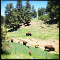 Photo taken at Buffalo Herd Overlook by Beci M. on 6/9/2013