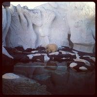 12/19/2012 tarihinde Darrylziyaretçi tarafından Wild Arctic'de çekilen fotoğraf
