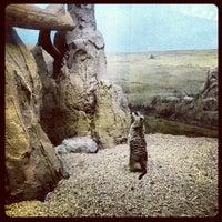 Photo taken at Prospect Park Zoo by Dana D. on 5/23/2013