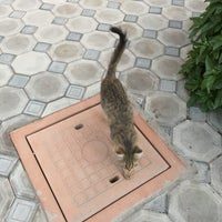 Снимок сделан в Узбекистан пользователем Naoya S. 8/10/2018