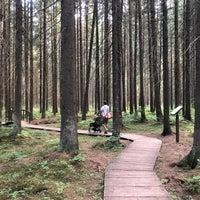 Photo taken at Эко-тропа в Комарово by Ulcha on 7/12/2018