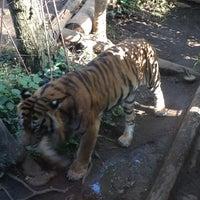 Photo taken at Ueno Zoo by Arisa S. on 11/25/2012