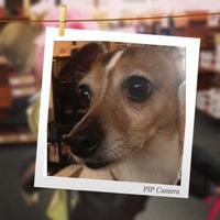 Photo taken at Pet Supplies of Bayside by Joe W. on 4/13/2013