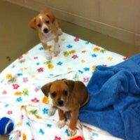 Photo taken at Young Williams Animal Shelter by D on 10/8/2012