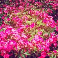 Photo taken at John McLaren Memorial Rhododendron Dell by Daniel Eran D. on 6/9/2013