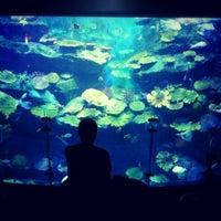 Photo taken at SEA LIFE Bangkok Ocean World by Galazpop .. on 10/30/2012