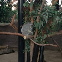 1/2/2013 tarihinde Bearleyziyaretçi tarafından Koala Exhibit'de çekilen fotoğraf