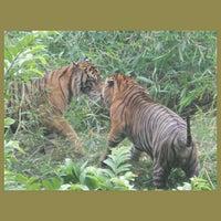 Photo taken at Kebun Binatang Ragunan by Marwan M. on 10/14/2012