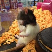 Foto scattata a PetSmart da PomMom il 9/21/2012