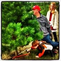 Christmas Tree Farm Elgin