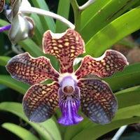 10/26/2012 tarihinde Maddalena M.ziyaretçi tarafından Singapore Botanic Gardens'de çekilen fotoğraf