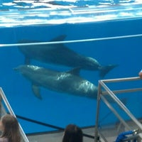 Photo taken at Dolphin Show by Mark O. on 6/19/2012
