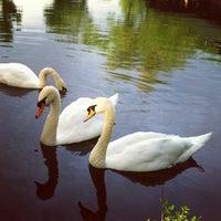 5/15/2013にNatasha K.がSwan Lakeで撮った写真