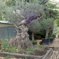 Photo taken at jardineria santacreu by Diògenes d. on 10/19/2012