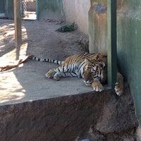Foto tomada en Centro Ecologico de Sonora por Alejandro D. el 2/21/2017