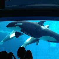 Photo taken at Port of Nagoya Public Aquarium by yuri on 9/16/2013