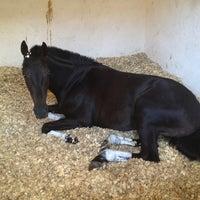 7/21/2013 tarihinde GRy .ziyaretçi tarafından Yarış Atları Hastanesi'de çekilen fotoğraf