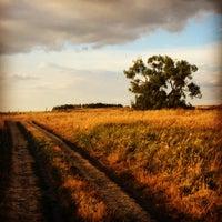 Photo taken at Одинокое дерево (Мшанка) by Don Azelio on 8/7/2014