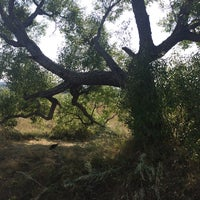 Photo taken at Одинокое дерево (Мшанка) by Don Azelio on 8/14/2014