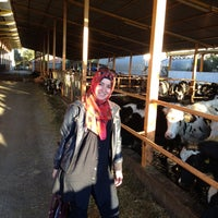 Photo taken at Tolina Tarim by Suheyla D. on 11/8/2013